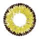 2 Sunshine Yellow Bicolor